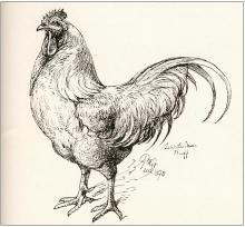 220-Harrison Weir Cock